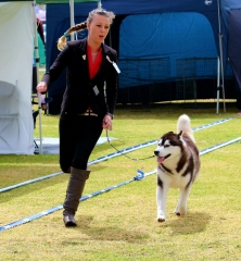 Breeder and a dog, Running round the show ring