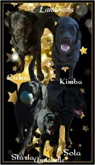 A collage of our black labradors
